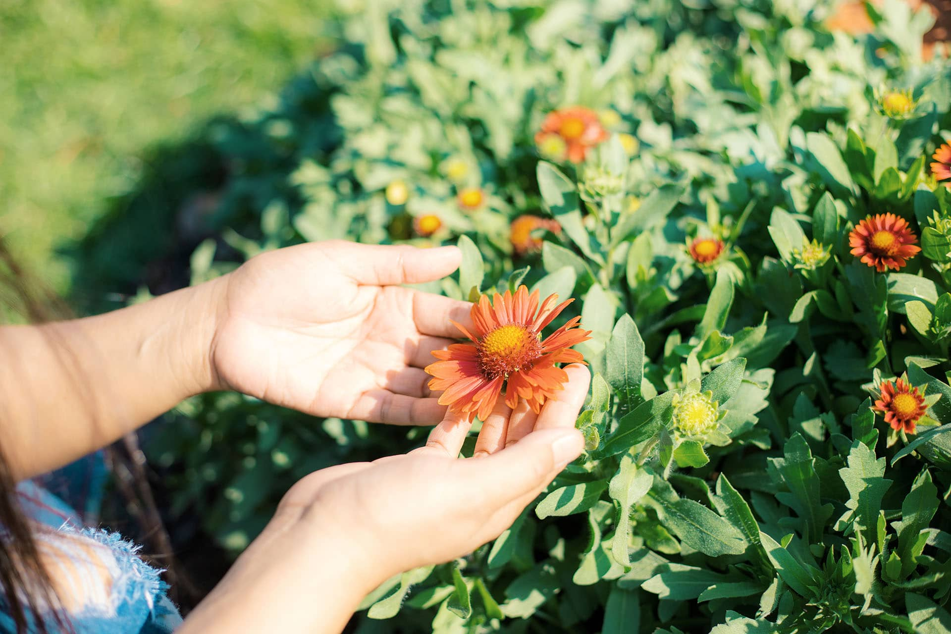 cuidar jardín en verano